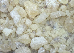 Jual Gum Damar Resin Indonesia